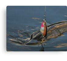 Northern Pike (Jackfish) Canvas Print