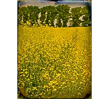 English summer Photographic Print