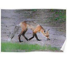 Mamma Fox. Poster