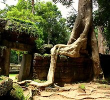 Ta Prohm Temple II - Angkor, Cambodia. by Tiffany Lenoir