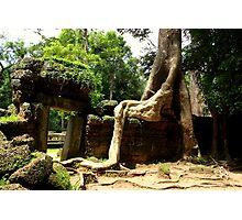 Ta Prohm Temple II - Angkor, Cambodia. Photographic Print
