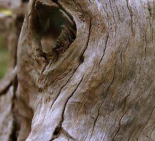 Wooden Eye by tarynb