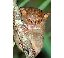 Tarsier from Philippines (Bohol) Photographic Print