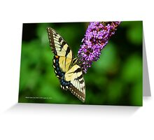 Papilio Glaucus - Eastern Tiger Swallowtail | Middle Island, New York Greeting Card