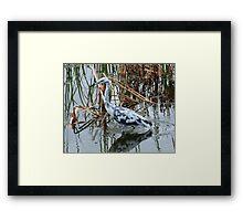 Small Blue Heron Framed Print