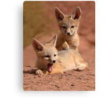 Kit Fox Pups Peas In A Pod Canvas Print
