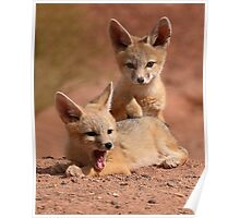 Kit Fox Pups Peas In A Pod Poster