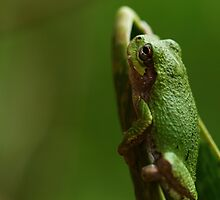 Frog by Dipali S