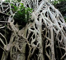 Ta Prohm Temple V - Angkor, Cambodia. by Tiffany Lenoir