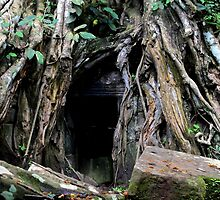 Ta Prohm Temple VI - Angkor, Cambodia. by Tiffany Lenoir