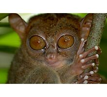 Tarsier from Philippines Photographic Print