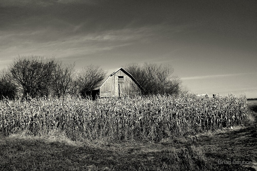 Dilapidated Barn by Brian Gaynor