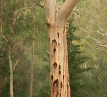 Trees at Brownhill Creek,S.A. by elphonline