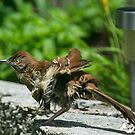 Little Birds Shakes of TRopical Storm Ana by imagetj