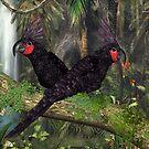 Black Palm Cockatoo by Walter Colvin