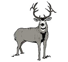 Trophy buck art Photographic Print