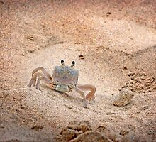 Hello Mr. Crab by ShotsOfLove