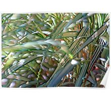 Ornamental Ribbon Grass Abstract 3 Poster