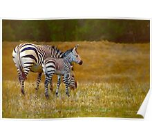 Zebra Mom and Foal Poster