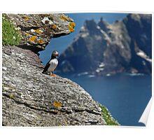 Puffin Skellig Island, Ireland Poster