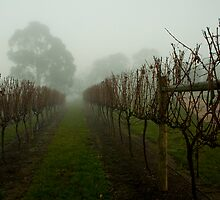 True cool climate viticulture! by nealbrey