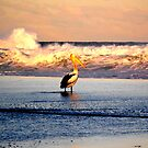 pelican and the flame of the sea by miroslava