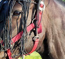 Head of horse with anti bug by theheijt