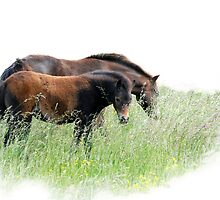 Horses of Norfolk by ©FoxfireGallery / FloorOne Photography