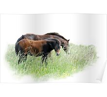 Horses of Norfolk Poster