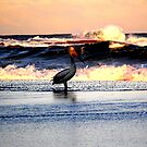 pelican in the sunset by miroslava