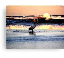 pelican in the sunset Canvas Print