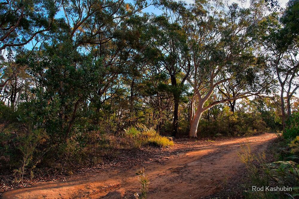 Bungoona Path by Rod Kashubin