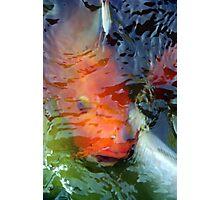 Koi Under Water Photographic Print