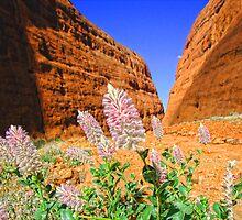 The Olgas Gorge. Uluru-Kata Tjuta National Park. Australia by vadim19