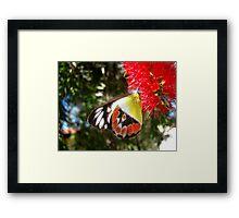 Scarlet Jezebel Framed Print