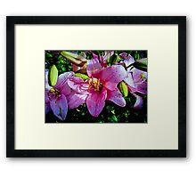 Cancer Lillies  Framed Print