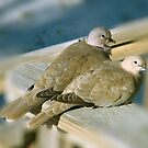 The Love Doves by Brad Sumner