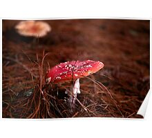 Fly Agaric (Amanita muscaria) Poster