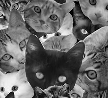 BW Cat Collage by spookydooky
