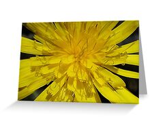 Yellow, bright dandelion Greeting Card