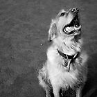 Happy Dog by clairehogan