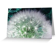 Cool white dandelion with waterdrops Greeting Card