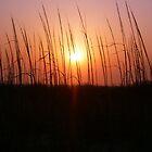 Sunset Through Dune Grass by clairehogan