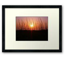 Sunset Through Dune Grass Framed Print
