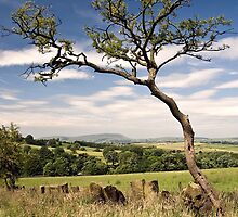 Pendle Hill from Wycoller by Steve  Liptrot