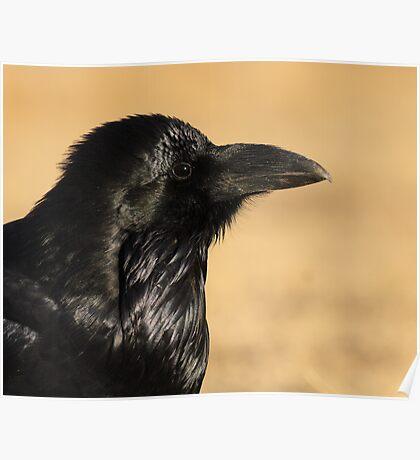 Sunset Raven Poster