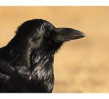 Sunset Raven Photographic Print