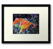 Lily 2 Framed Print