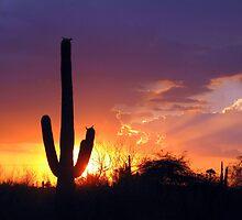 Sundown by Terry Temple