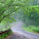 Foggy Country road by Valeria Lee